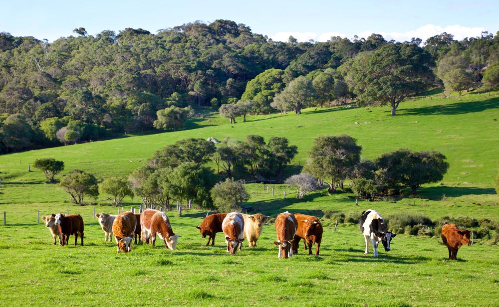 Livestock Exchange Livingston TX